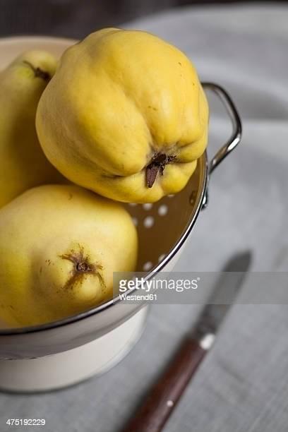 Three quinces in enamel colander, studio shot