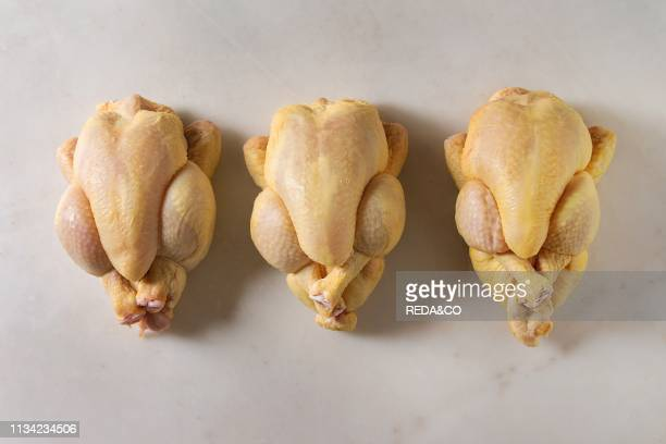 Three Raw organic uncooked whole yellow corn mini chicken in row over marble background Cooking concept Flat lay space