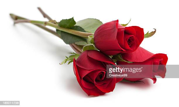 three red rose stems - red roses stock photos and pictures