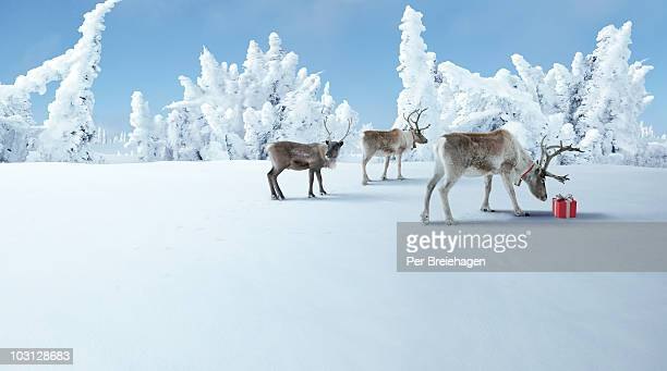 three reindeer check out a Christmas gift