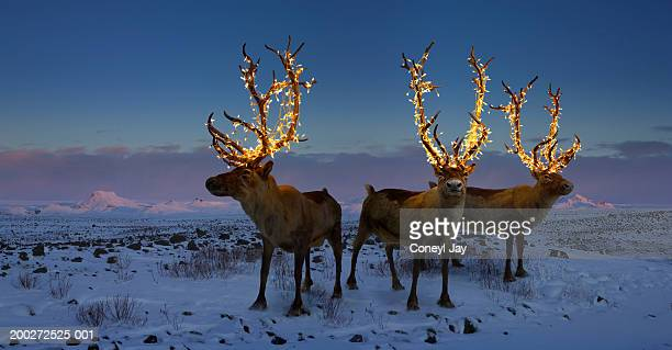 three reindeers with lights in antlers (digital composite) - reindeer stock pictures, royalty-free photos & images