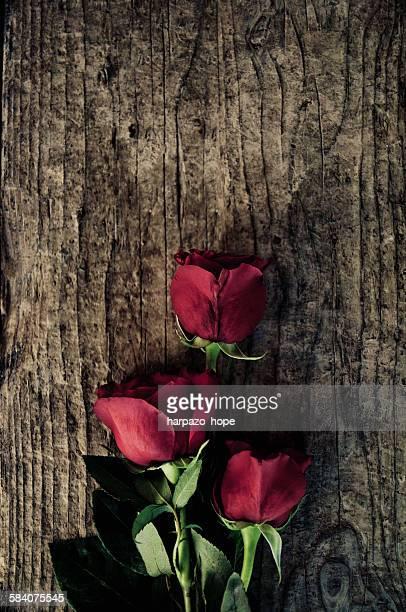 three roses on weathered wood - hope imagens e fotografias de stock