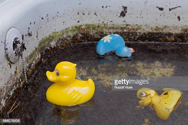 Three rubber ducks floating in old dirty bathtub