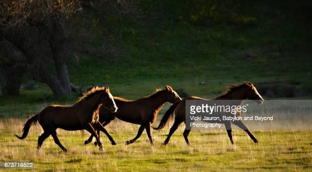 Three Running Horses at Sunrise