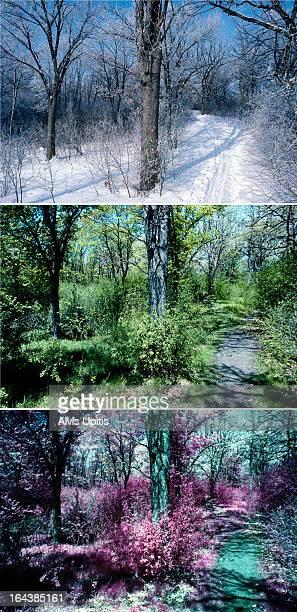 Three season of park and path