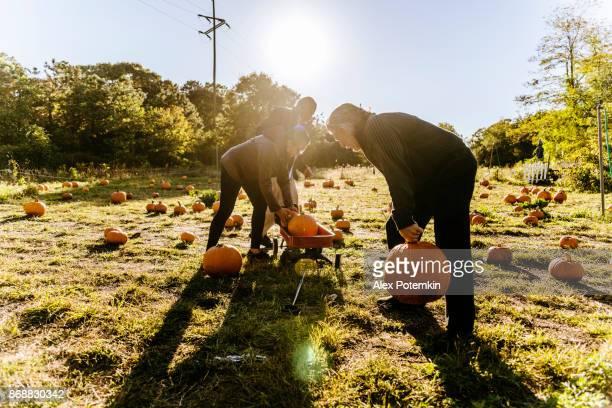 three senior friends picking pumpkins at pumpkin patch - pumpkin patch stock photos and pictures