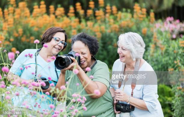 three senior women taking photos in garden - florida nature stock pictures, royalty-free photos & images