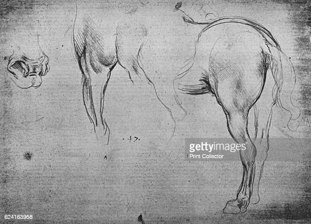 Three Sketches of a Horse's HindQuarters and one of its Nostrils' c1480 From The Drawings of Leonardo da Vinci [Reynal Hitchcock New York 1945]...