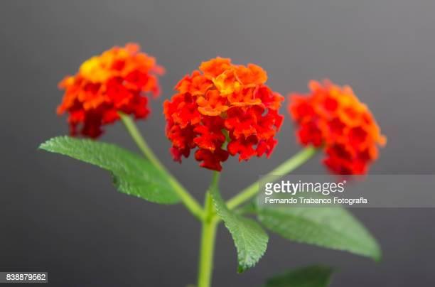 Three small flowers