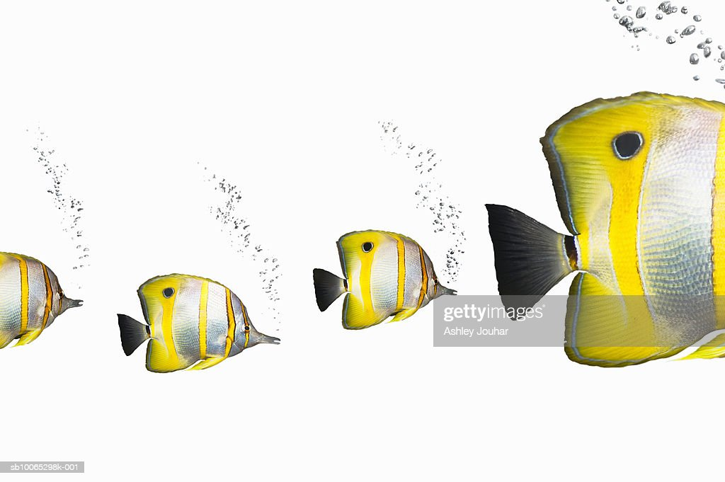 Three small tropical fish following big tropical fish : Foto stock