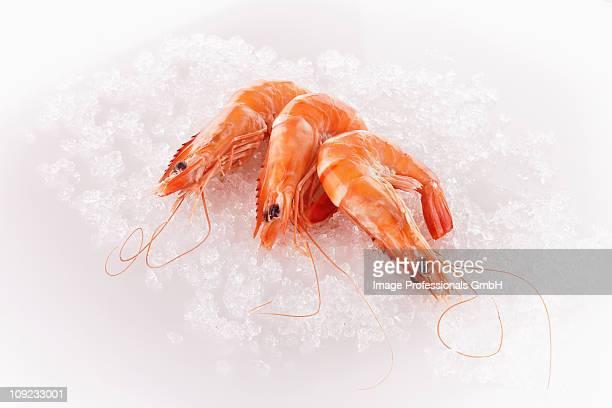 Three steamed prawns on ice