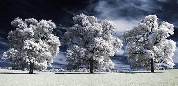 Three surreal large white trees