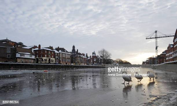 Three swans cross the frozen River Ouse in York