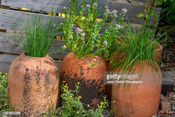 three terracotta plant pots filled with green chives and mint - pot plant stock pictures, royalty-free photos & images