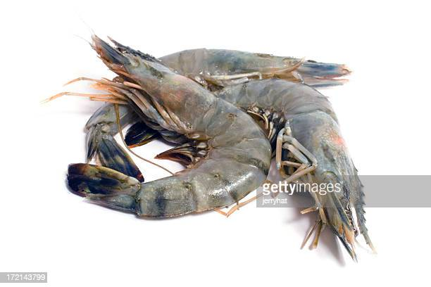 Three Tiger Prawns