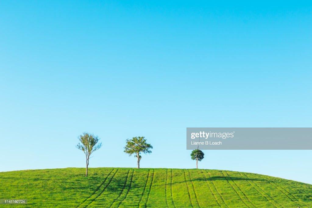 Three Tree Hill : Stock Photo