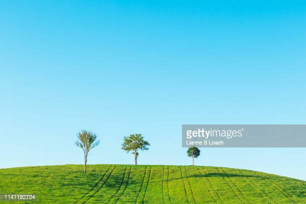 three tree hill - lianne loach stock pictures, royalty-free photos & images