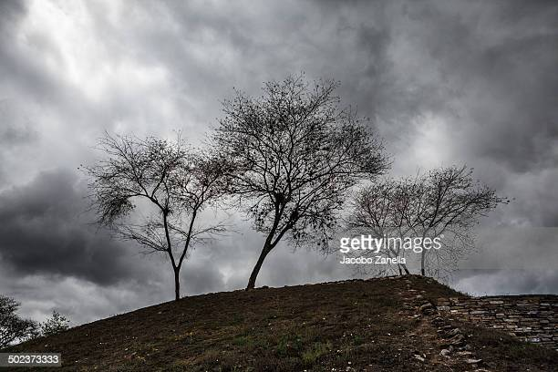Three trees at the top of a pyramid