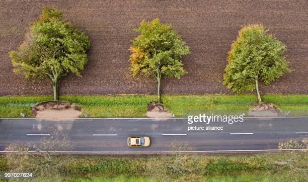 Three trees lie uprooted by a street near Rautenberg Germany 6 October 2017 Photo Julian Stratenschulte/dpa