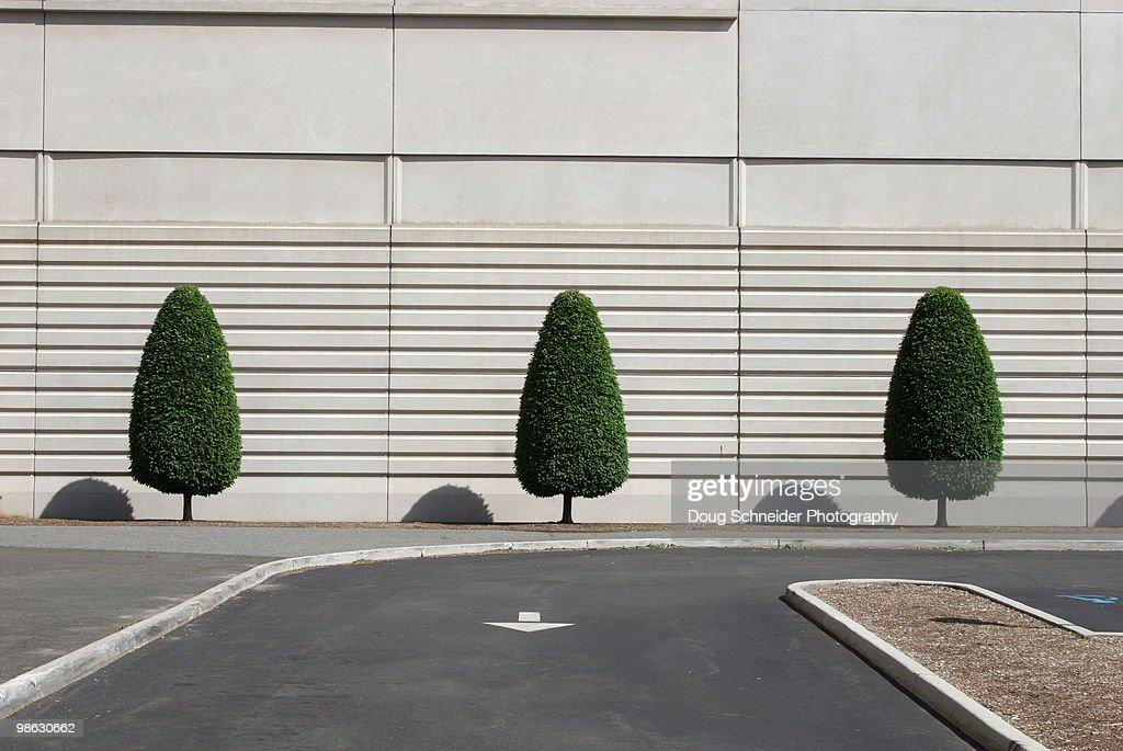 Three Trees : Stock Photo