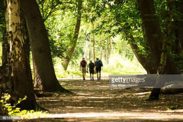 three walkers in woodland, Richmond Park, London.
