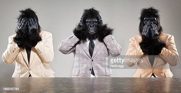 three wise monkeys - primate stock pictures, royalty-free photos & images