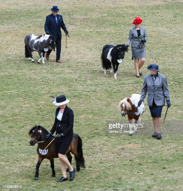 Three women and a man walk their minature horses as judges mark them during the Sydney Royal Easter Show at Sydney Showground on April 20, 2019 in...