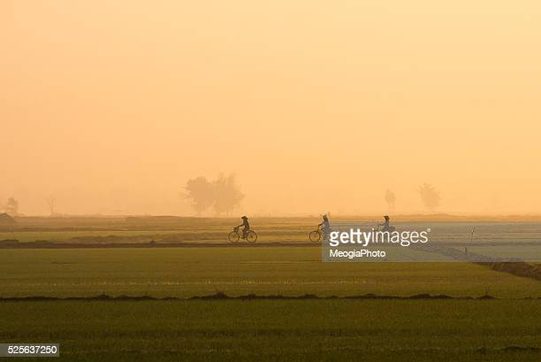 Three women ride bicycle in the rice field in early morning in Hoian