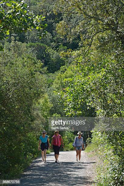 three women walking on a path with trees - gard stock photos and pictures
