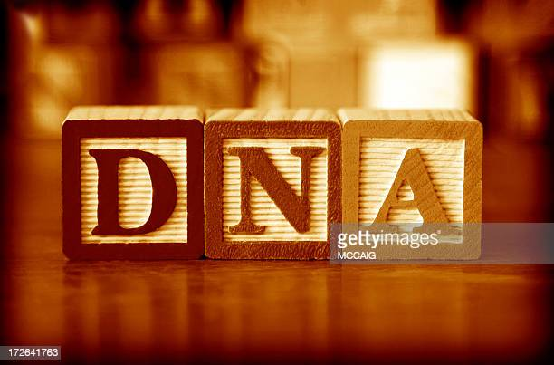 Three wooden building blocks spelling out the letters DNA