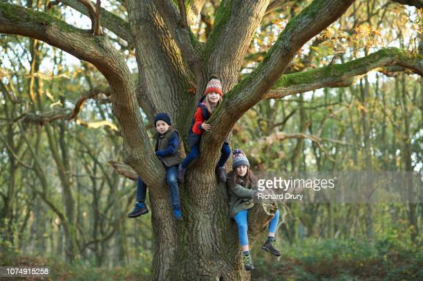 Three young children sitting in the branches of an old oak tree