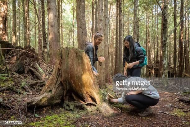 drie jonge vrouwen eetbare porcini paddestoelen plukken in het bos, canada - foerageren stockfoto's en -beelden