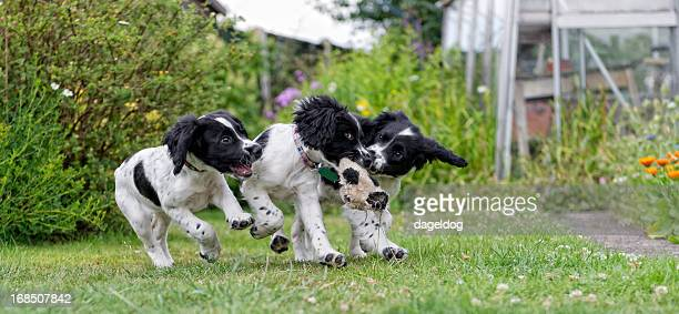 three's a crowd - dog fight stock pictures, royalty-free photos & images