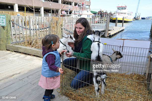 Threeyearold Penny Breen from Brunswick left enjoys young goats with Ivy Banner granddaughter of Anne Bossi owner of Sunset Acres Farm in Brooksville...