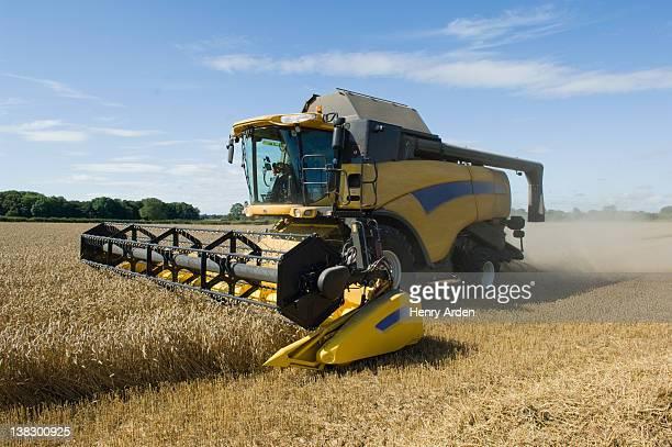 Thresher harvesting wheat