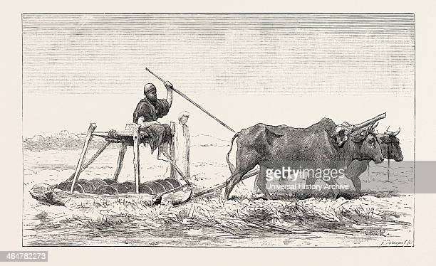 Threshingsled Egypt Engraving 1879