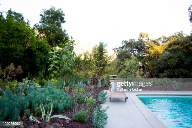 thriving cactus and succulent garden near 50's pool with lounge chair - landscaped stock pictures, royalty-free photos & images