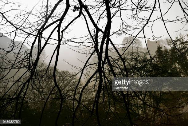 through bare branches peveril castle stands upon hill - peveril castle stock pictures, royalty-free photos & images