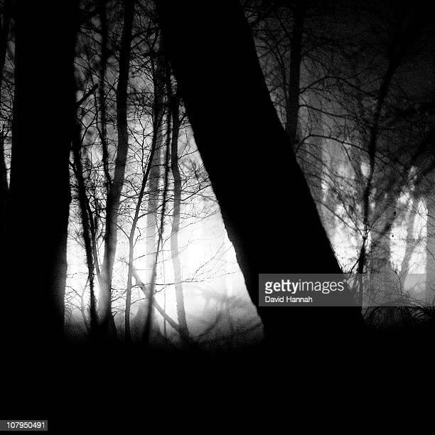 through the dark trees - 動画関連 ストックフォトと画像
