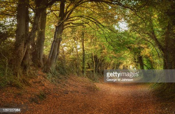 through the eye - west sussex stock pictures, royalty-free photos & images