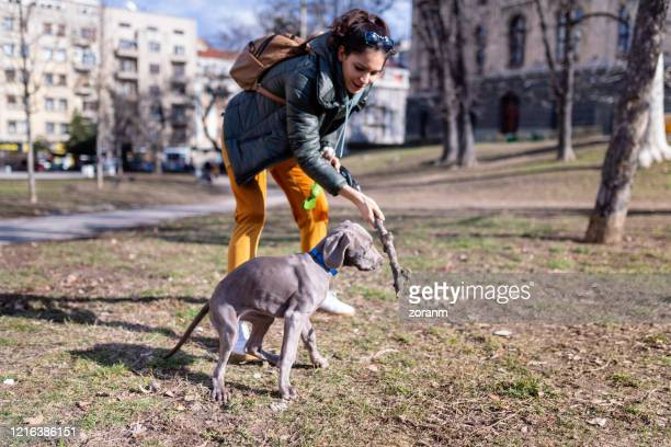 throwing a stick to her dog in an empty park - off leash dog park stock pictures, royalty-free photos & images