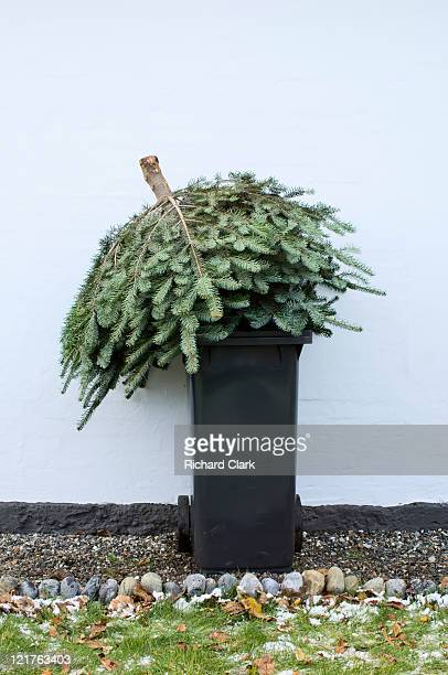 throwing out christmas tree - chilly bin stock photos and pictures