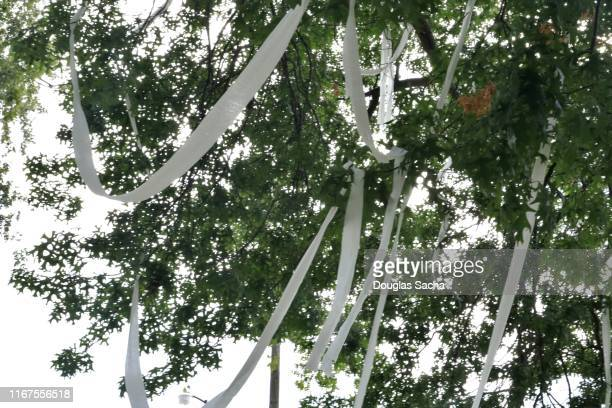 thrown toilet paper on a tree from vandals - toilet paper tree stockfoto's en -beelden