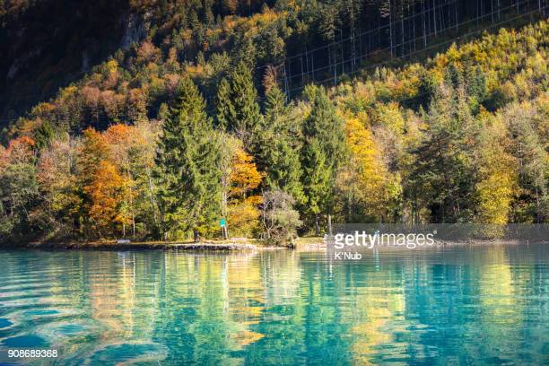Thun lake, transparent water, at Interlaken Switzerland with yellow tree in autumn