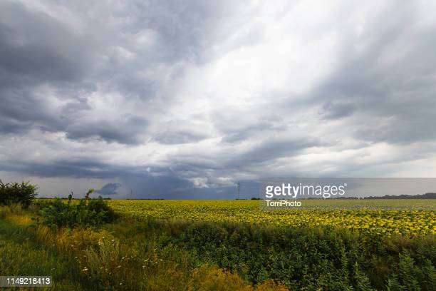 thundercloud over the field - moody sky stock pictures, royalty-free photos & images