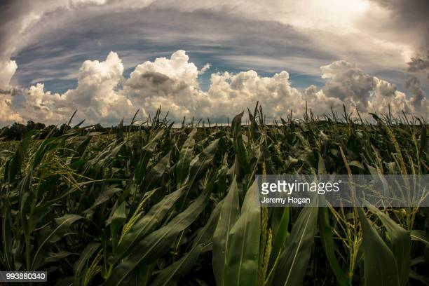 thunderstorm clouds pass over the indiana sky and cornfields in july - bloomington indiana stock photos and pictures