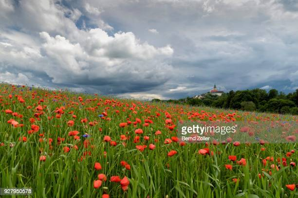Thunderstorm over monastery Andechs with poppy field and cornflowers, pilgrimage church, Starnberg district, Upper Bavaria, Bavaria, Germany