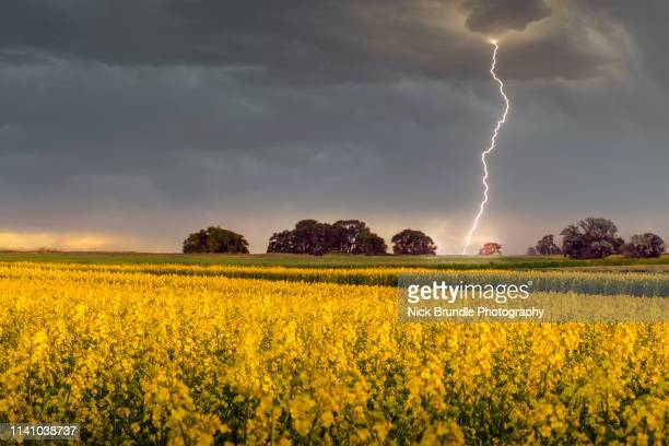thunderstruck - hitting stock pictures, royalty-free photos & images