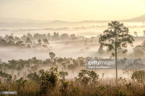 thung salaeng luang national park savanna of - biodiversity stock pictures, royalty-free photos & images