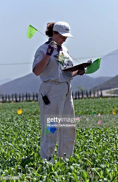 Thursday 5/18/2000 Camarillo CA –– Liz Stanton of New York City is from the American Maze Company working on the planning of The Amazing Maize Maze...